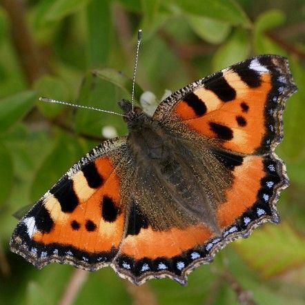 papillon vu d'en haut
