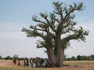 photo d'un groupe sous un arbre à palabre