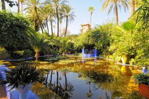 photo du jardin des Majorelle