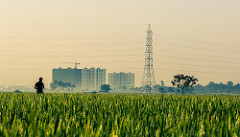 photo d'un champ avec des immeubles en arriere plan