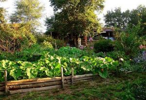 Photographie d'un jardin en permaculture