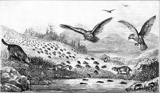 Gravure parue dans le Popular science monthly en 1877 représentant la migration des lemmings