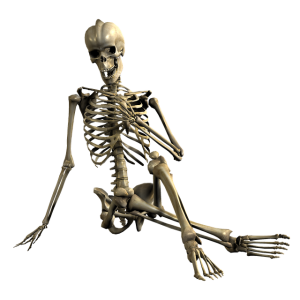 sqelette en position assise jambes croisées