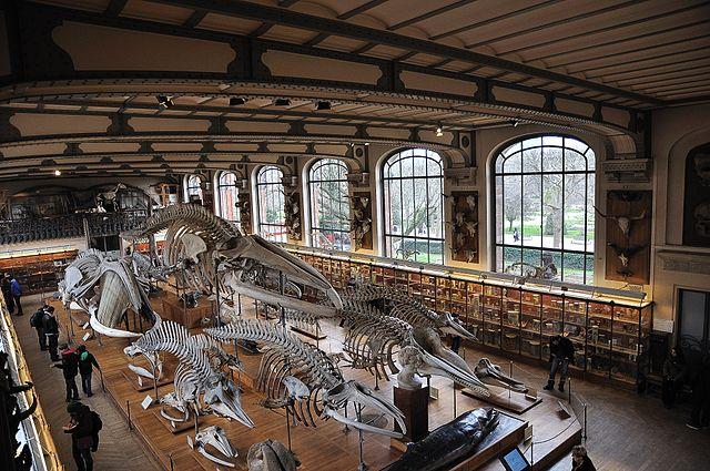 Photographie de la Galerie de Paléontologie Muséum d'histoire naturelle