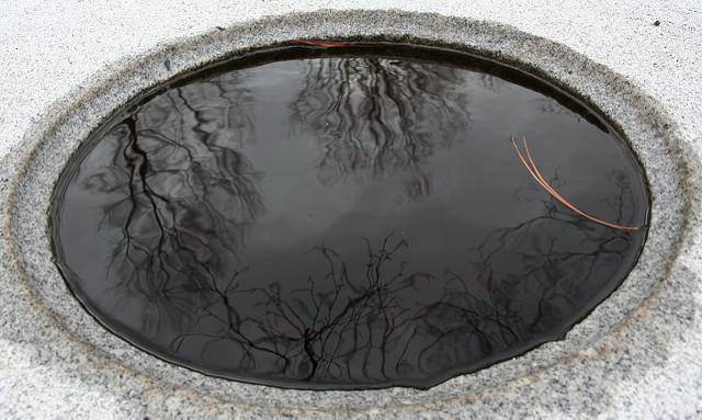 reflets d'arbres dans une vasque