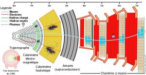 Coupe d'un détecteur CMS (Solénoïde compact pour muons)