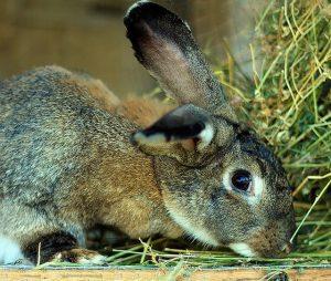 photographie d'un lapin