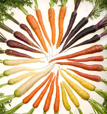 Photographie de carottes de toutes les couleurs disposées en cercle