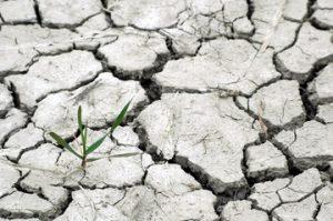 photographie en gros plan d'une terre déchéchée