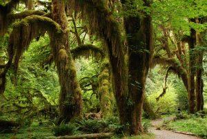 photographie d'arbres de la forêt tropicale