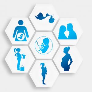 7 schémas sur la grossesse