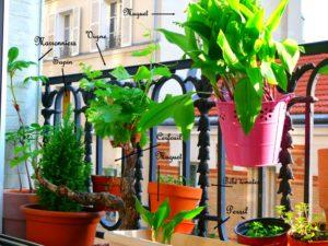 Balcon potager à Paris