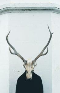 Photo de crâne d'animal