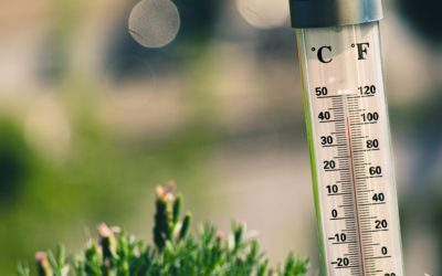 Pourquoi peut-on mourir de chaud ?