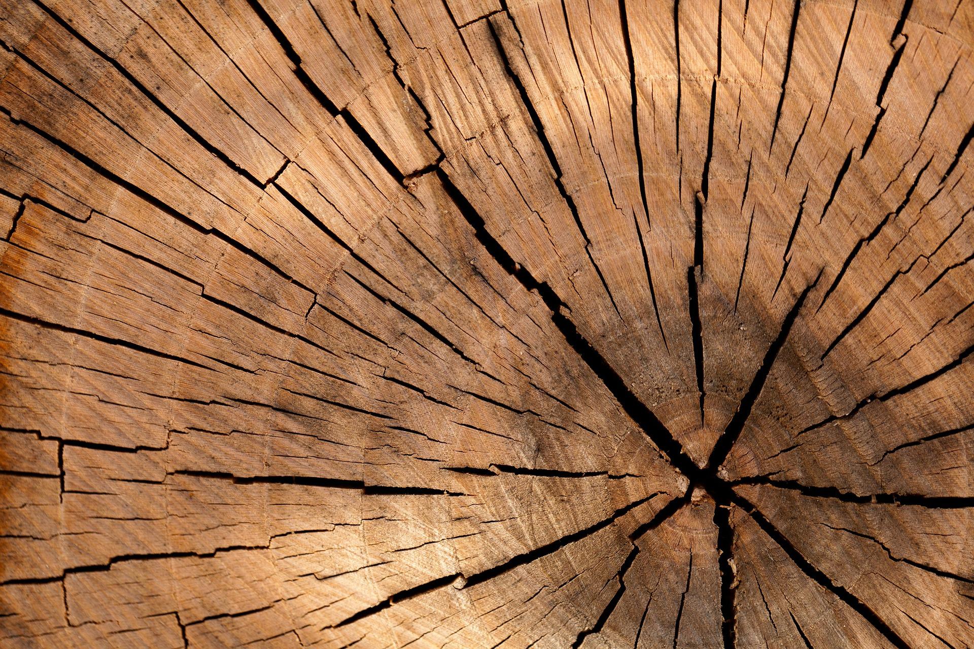 Tronc d'arbre en coupe