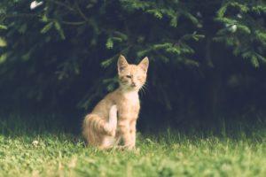 Chat qui se gratte dans un jardin, image de Dariusz Sankowski de Pixabay