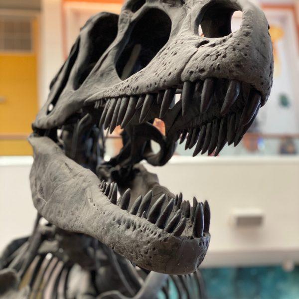 Paléontologie : comment les dinosaures ont-ils disparu ?