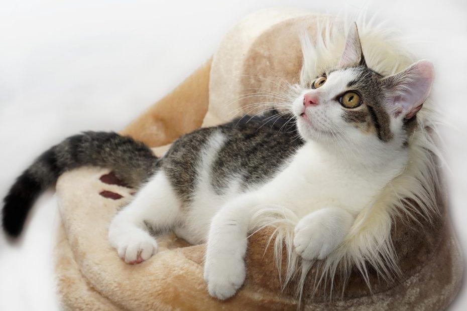 Un chat couché dans son panier qui a l'air heureux