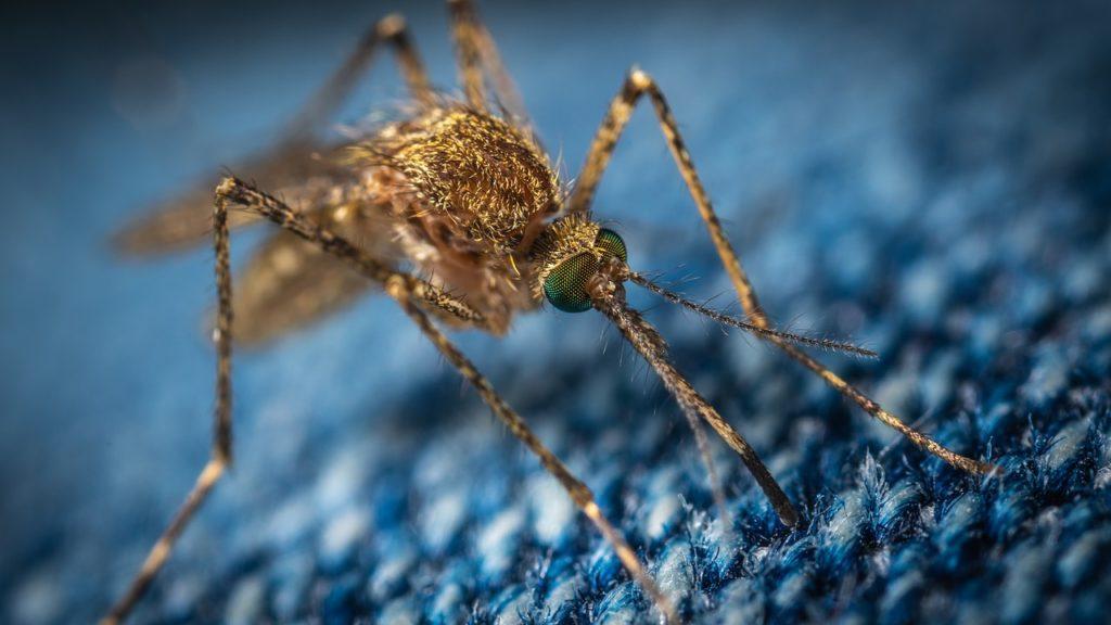 Moustique en gros plan sur un tissus laineux bleu